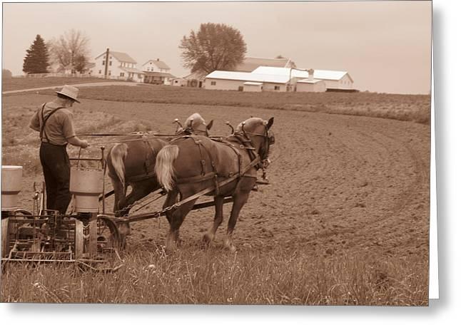 Amish Community Greeting Cards - Amish Farmer Greeting Card by Janet Pugh