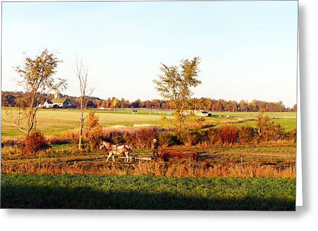 Amish Farmer Plowing A Field, Usa Greeting Card by Panoramic Images