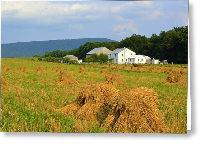Amish Harvest #1 - Milroy Pa Greeting Card