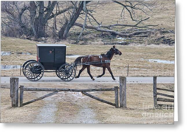 Amish Horse And Buggy March 2013 Greeting Card