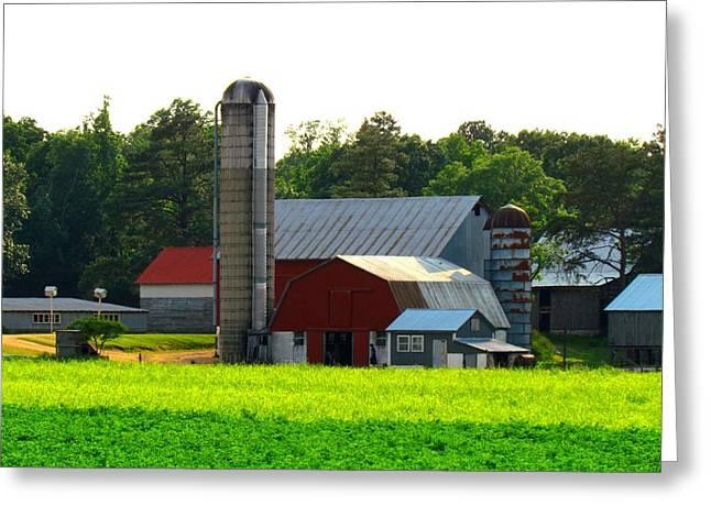Amish Life Greeting Card by Trish Clark