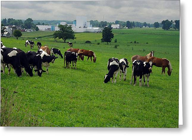 Amish Pastureland  Greeting Card