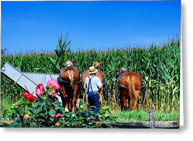 Amish Plowing Greeting Card by Gena Weiser