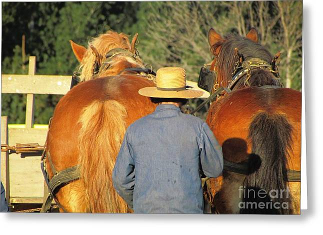 Amish Team Greeting Card