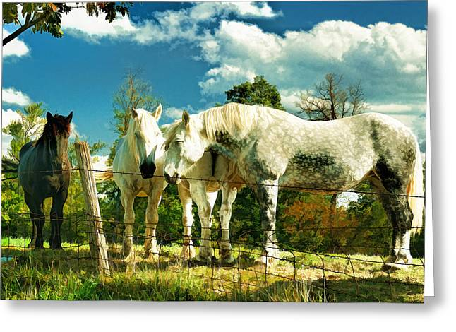 Amish Work Horses Greeting Card by Dick Wood