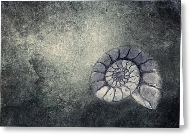 Ammonit  Greeting Card