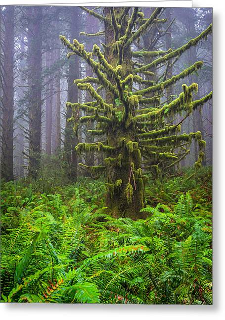 Among The Redwoods Greeting Card by Mike  Walker