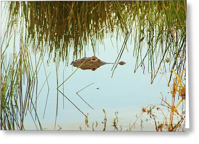 Among The Reeds Greeting Card by Lynda Dawson-Youngclaus