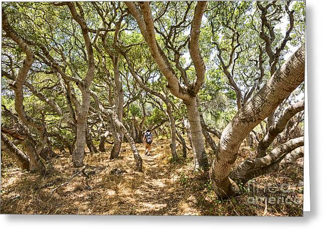Among The Trees - The Mysterious Trees Of The Los Osos Oak Reserve Greeting Card by Jamie Pham