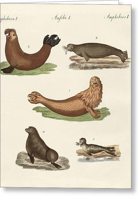 Amphibians Greeting Card by Splendid Art Prints