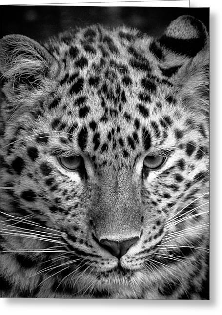 Amur Leopard In Black And White Greeting Card
