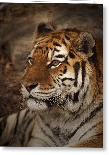 Amur Tiger 2 Greeting Card by Ernie Echols