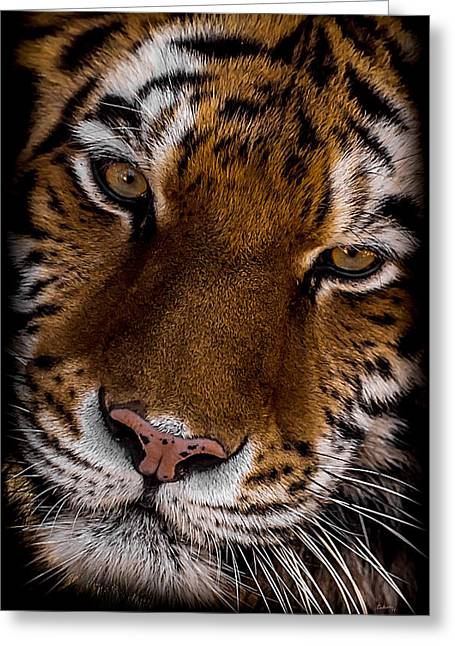 Amur Tiger Portrait Greeting Card by Ernie Echols