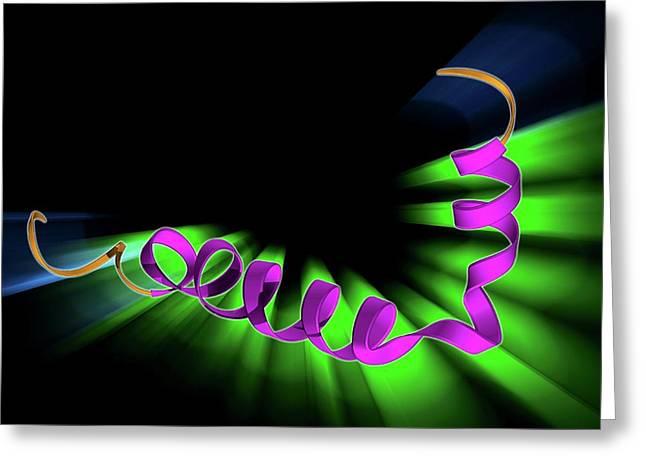 Amyloid Beta Protein Molecule Greeting Card by Laguna Design