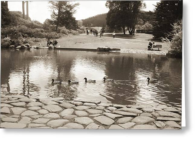 Greeting Card featuring the photograph An Afternoon At Botanical Garden by Hiroko Sakai