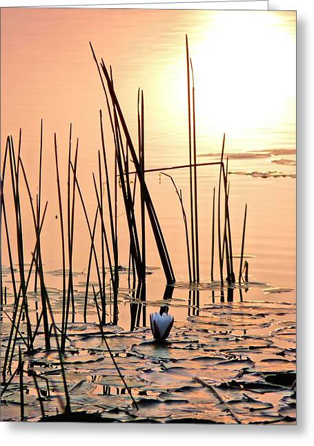 An Alabama Sunrise Greeting Card by JC Findley