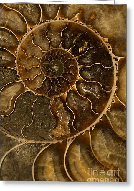 An Ancient Ammonite Pattern II Greeting Card by Jaroslaw Blaminsky