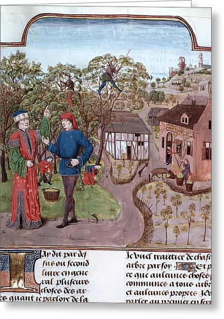 An Apple Orchard Greeting Card by British Library