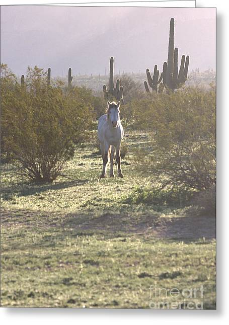 Greeting Card featuring the photograph An Arizona Morning by Ruth Jolly