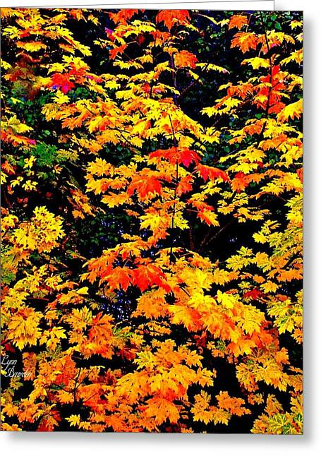 An Array Of Colors Greeting Card by Lynn Bawden