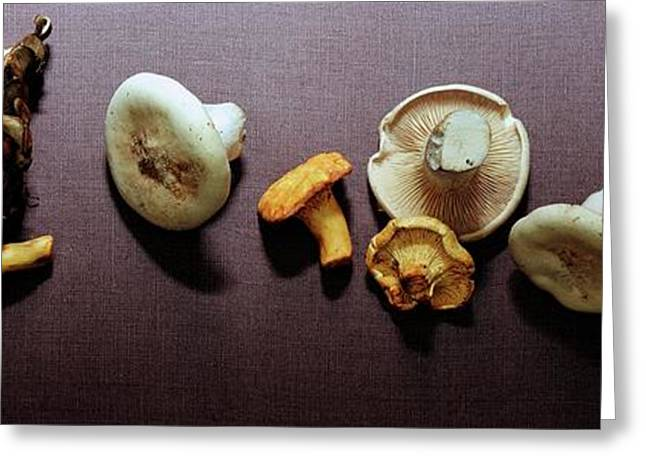 An Assortment Of Mushrooms Greeting Card by Romulo Yanes