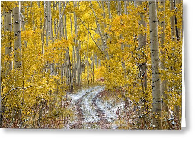 An Autumn Path Greeting Card by Leland D Howard