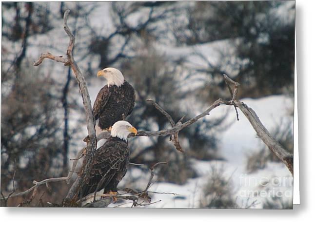 An Eagle Pair  Greeting Card