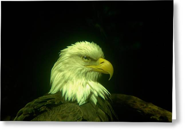 An Eagle Portrait Greeting Card by Jeff Swan