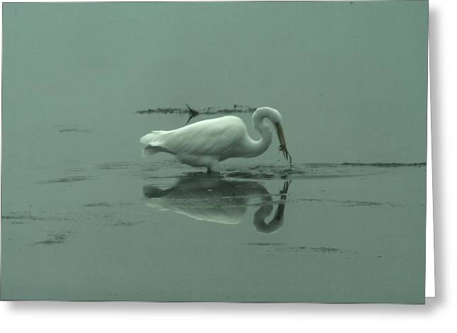 An Egret Feeding Greeting Card by Jeff Swan
