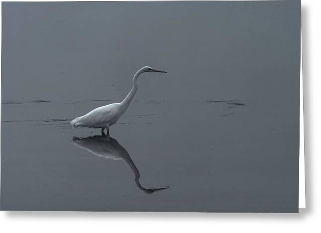 An Egret Standing In Its Reflection Greeting Card