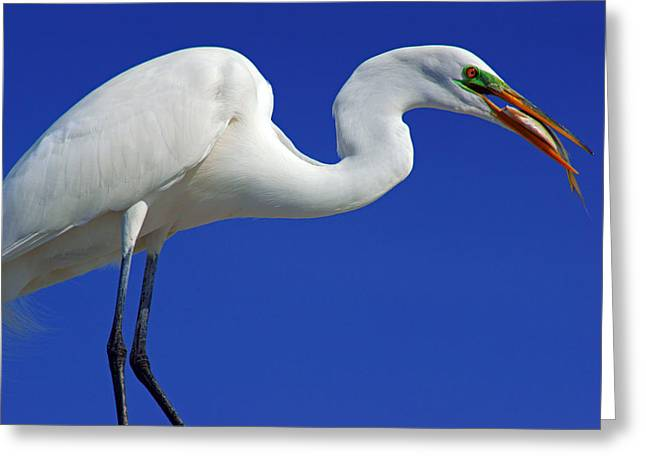 An Egret's Lunch Greeting Card