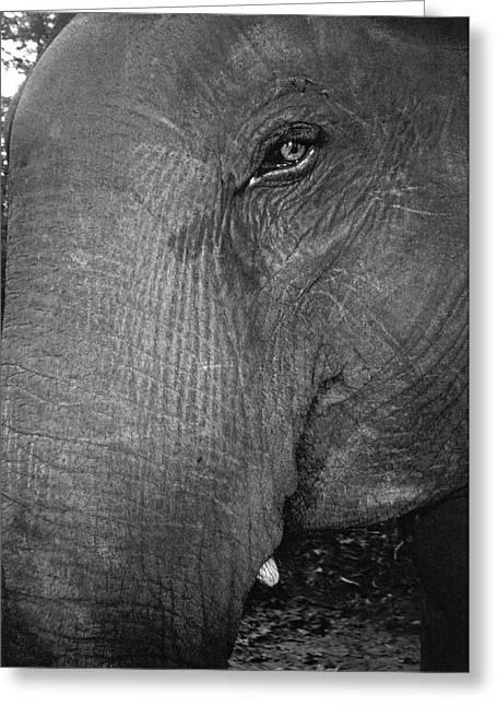 An Elephant's Head Greeting Card