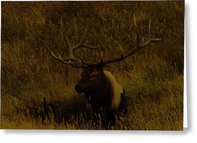 An Elk In The Mud Greeting Card