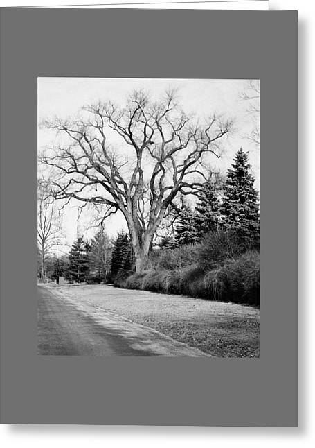An Elm Tree At The Side Of A Road Greeting Card by Tom Leonard