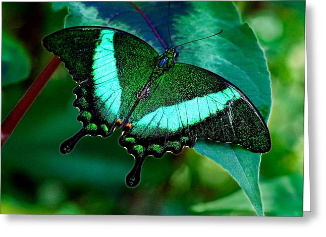 An Emerald Beauty Greeting Card by Karen Stephenson