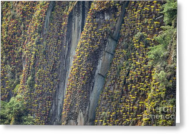 An Incline Of Bromeliads Greeting Card by Jason Bazzano