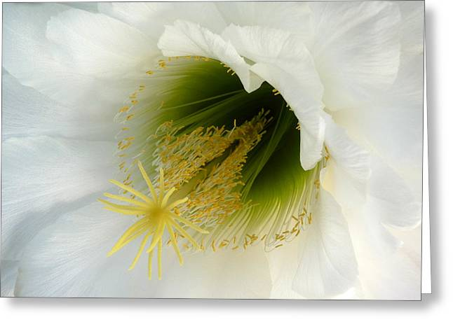 Greeting Card featuring the photograph An Inside View by Cindy McDaniel