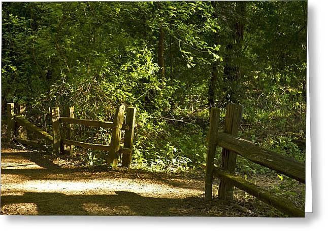 An Invitation To Walk In The Light Greeting Card by Larry Darnell