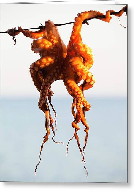 An Octopus Hung Up To Dry Greeting Card