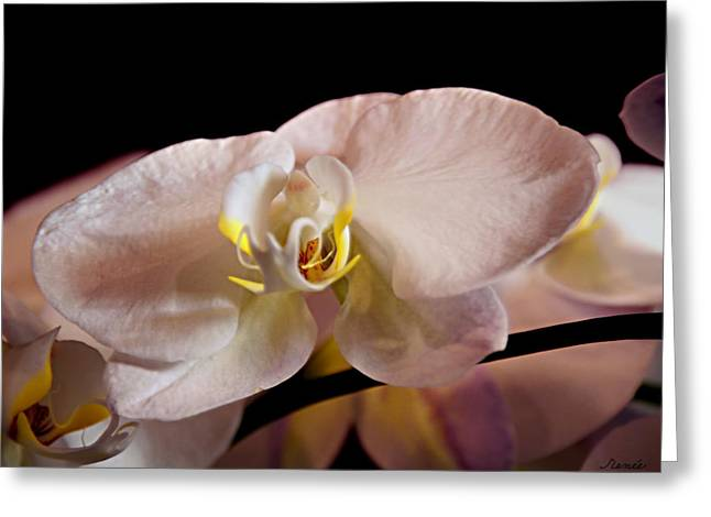 The Lisa Orchid Greeting Card