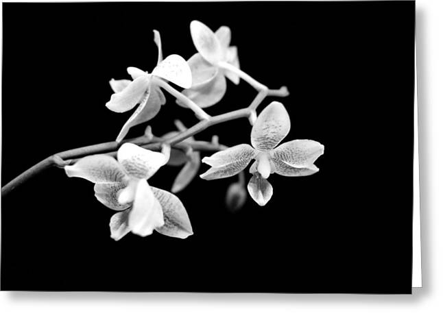 An Orchid  Greeting Card by Tommytechno Sweden
