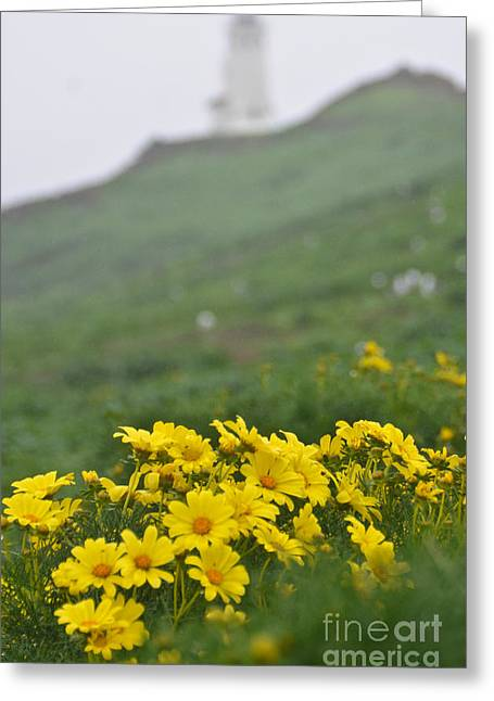 Anacapa Spring Greeting Card