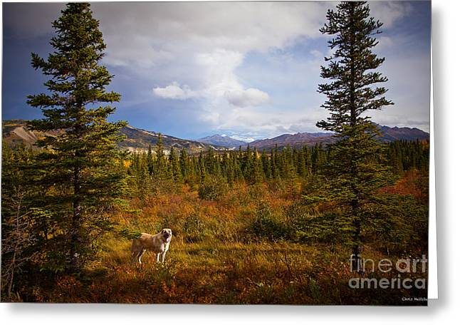 Anatolian Shepherd Greeting Card by Chris Heitstuman