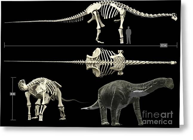 Anatomy Of A Titanosaur Greeting Card by Rodolfo Nogueira