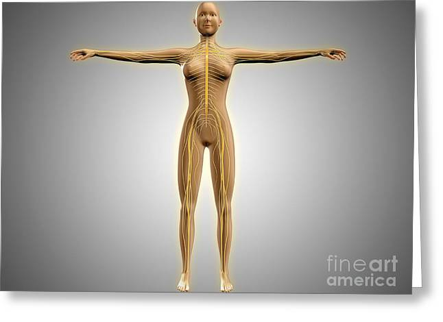 Anatomy Of Female Body With Nervous Greeting Card by Stocktrek Images