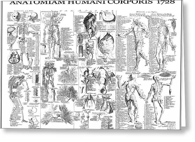 Anatomy Of The Human Body  1728 Greeting Card by Daniel Hagerman