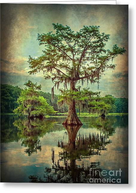 Ancestor's Cypress Greeting Card by Tamyra Ayles