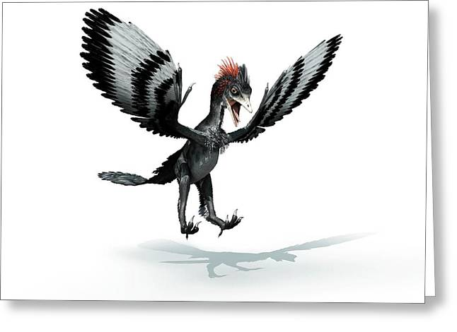 Anchiornis Feathered Dinosaur Greeting Card by Mikkel Juul Jensen