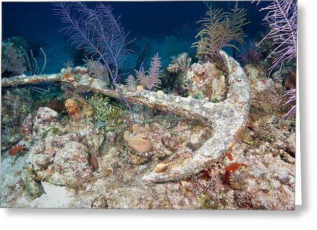 Anchor On Reef Greeting Card by Andrew J. Martinez