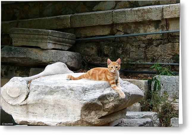 Ancient Agora Kitty Greeting Card